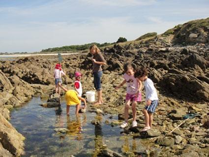 Club Nautique du Rohu - Les Moussaillons découvrent la faune et la flore marine