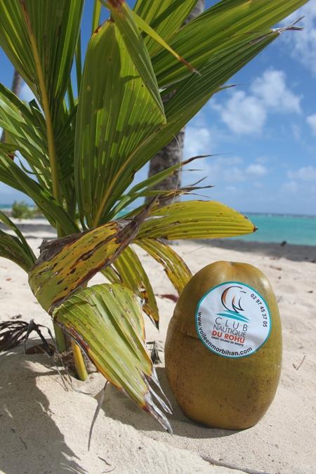 Le Rohu aux Iles du Cap vert